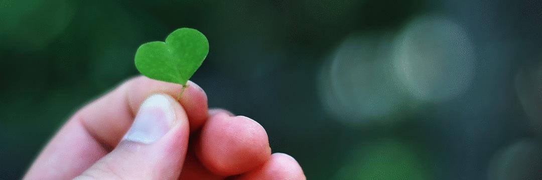 O que uma planta pode te ensinar sobre produção de conteúdo
