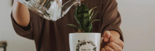 2 lições sobre escrita que aprendi cuidando de plantas