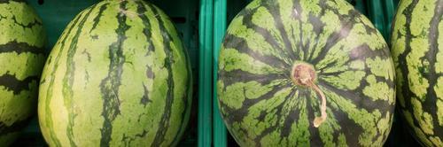 Já pendurou sua melancia no pescoço?